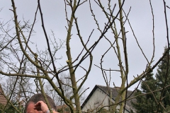 Winterschnitt-2008-06